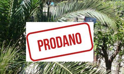 HITNO! GAJAC: Prvi red do mora, apartman 37 m2 s vrtom, A zona ► 89.000 €