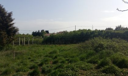 ZADAR/BOKANJAC  Građevinsko zemljište 1.300 m2, svi priključci, mirni dio ► 130 €/m2